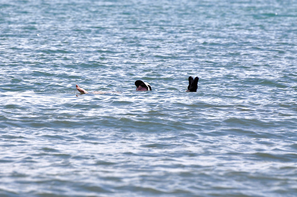 Pam says Bahia Ballena was the best ocean swimming she has ever experienced.